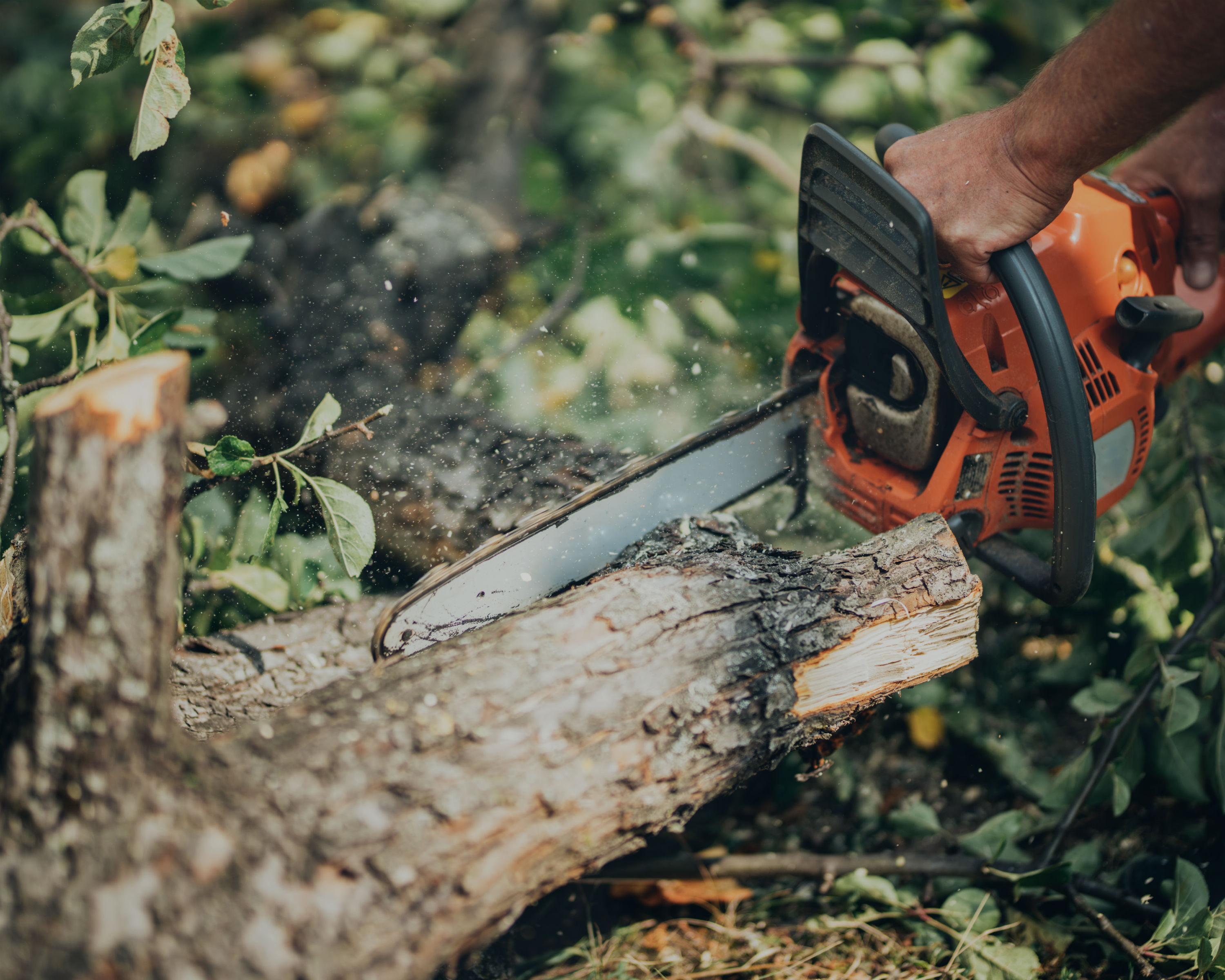 Top Tree Services