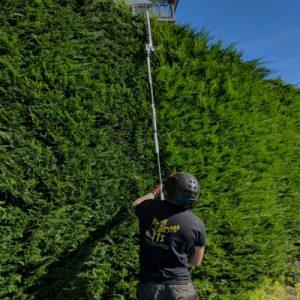 pruning 2