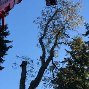 Tree removal Perthshire